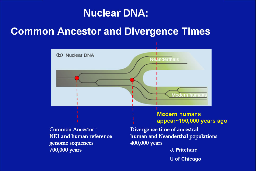 (PDF) The complete genome sequence of a Neandertal from ...