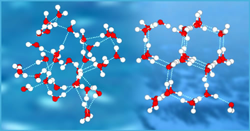 Water molecules are attracted to each other by hydrogen bonds.