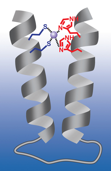 Berkeley Lab scientists have developed a nano-sized synthetic polymer    Synthetic Polymers Structure